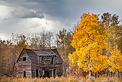 An old homestead that has seen better days.  This derelict log home near Ashton Idaho stubornly defies the elements year after year.  It was slowly rotting when I first saw it in 1988, it his since morphed from a home into art. Although it's December is near, it keeps seeing another Autumn.