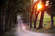 The sun flairs through trees overtop a gravel road in the countryside of Italy