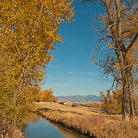 An irrigation canal flows by fall-colored cottonwoods at Montana Ranch in Montana's Gallatin Valley.