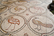 Israel, Coastal plains, Caesarea, The Palace of the ?Bird Mosaic? a 14.5 x 16m floor of a villa dating to the Byzantine period, 6-7th century CE