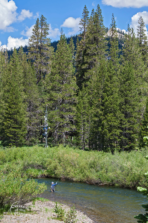 Fly fishing in the Middle Fork of the San Joaquin River, Devils Postpile National Monument, Inyo National Forest, Madera County, California, USA