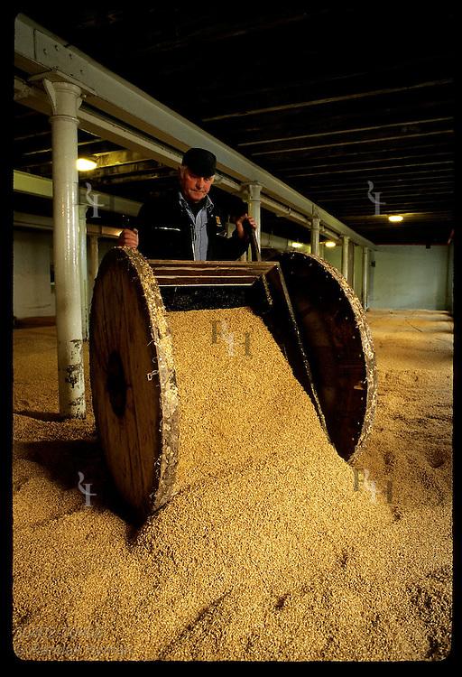 Worker dumps barrow of wet barley on stone floor of malting room at Highland Park; Orkney Islands Scotland