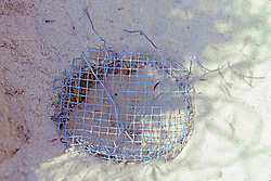 Diamondback Terrapin Nesting Site