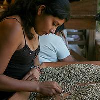 Vilma Castillo sorts coffee at Coop El Salto, a member of APECAFE. APECAFE is a certified Fairtrade second-level cooperative based in El Salvador.