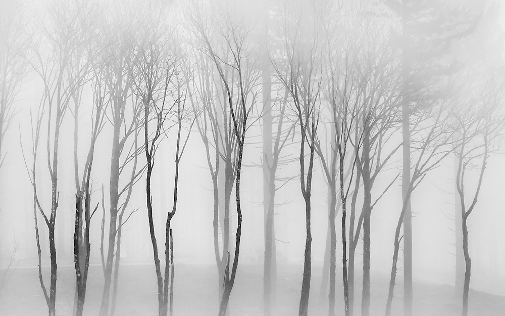 Low clouds streaming across a newly logged hillside create a beautiful setting for these remaining trees.