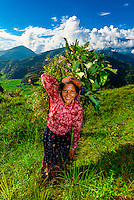 A local woman walking along a ridge above the Pokhara Valley, Nepal at Bimirapani.
