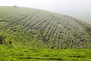 Terracettes on steep scarp slope of chalk downs, Pewsey Vale, near Knap Hill, Alton Barnes, Wiltshire, England, UK