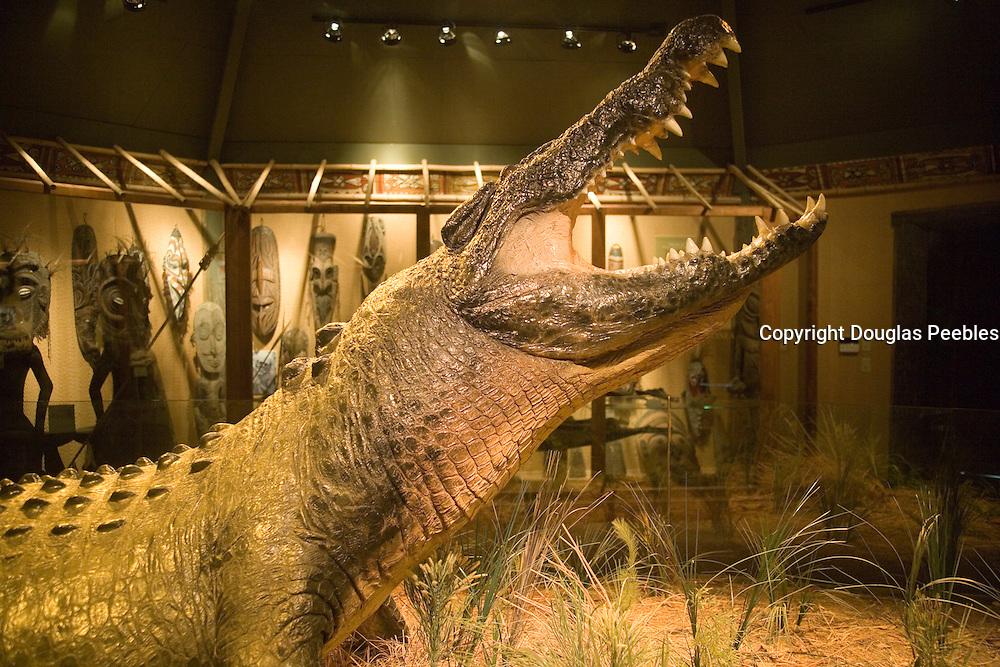 Gomek, St. Augustine Alligator Farm, St. Augustine, Florida, USA<br />