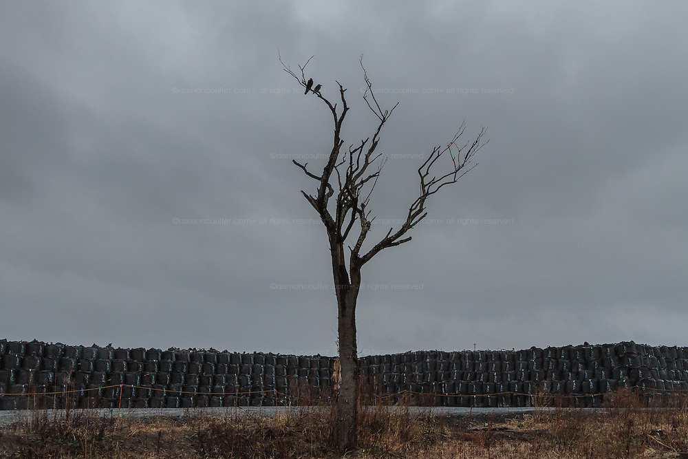 Bags containing debris and topsoil are piled on the coast near Tomioka inside the nuclear exclusion zone, Tomioka, Fukushima, Japan. Wednesday, March 9th 2016