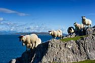 Photographer: Chris Hill, Beara, County Cork