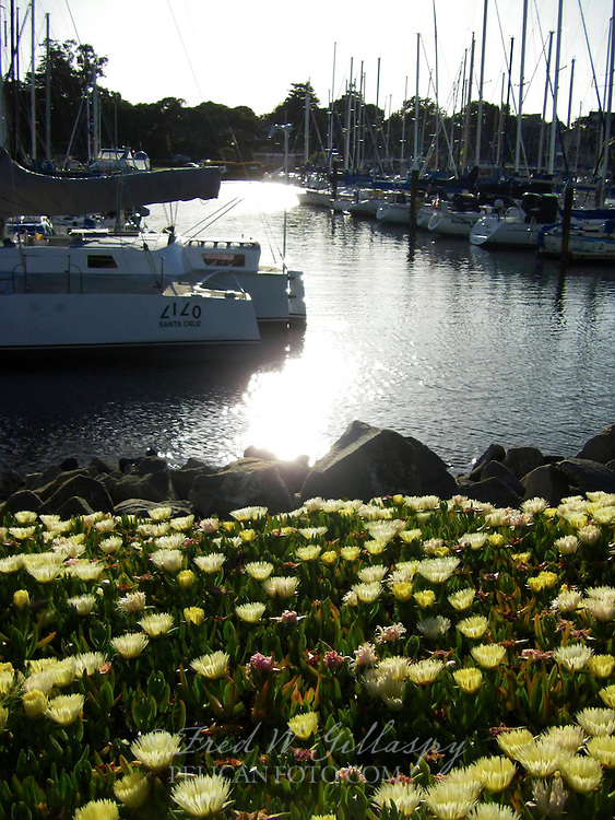 Santa Cruz Harbor 1207