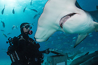 Jamin Martinelli face to face with a Great Hammerhead Shark<br /> <br /> Shot in Bimini, Bahamas