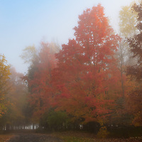 Sunlight and fog softens the colours of the fall trees.