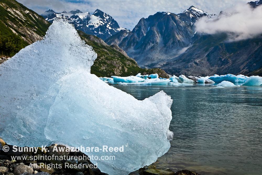 Icebergs from McBride Glacier in Muir Inlet, Glacier Bay National Park & Preserve, SE Alaska, on a sunny day, summer.