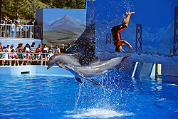 Bottlenosed Dolphins & Trainer Performing