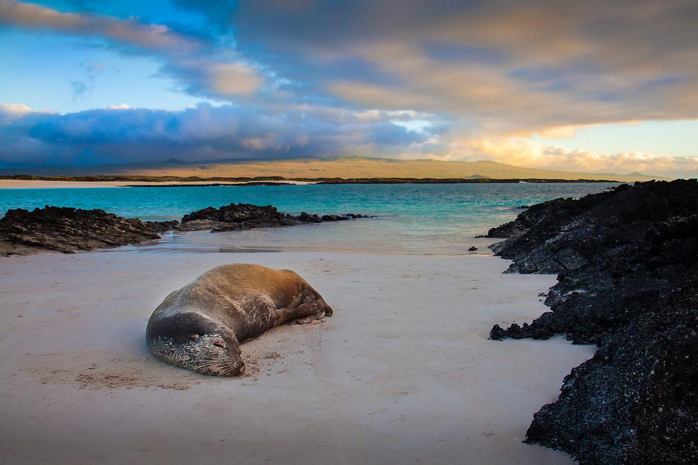 Sea Lion sleeping at the beach at the Galapagos Islands