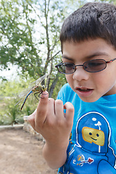 Boy examining green darner dragonfly on  a hand,  Mitchell Lake Audubon Center, San Antonio, Texas, USA.