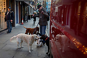 A dog walker stops to let his dogs interact which each other in Old Compton Street in Soho, on 7th February 2018, in London, England.