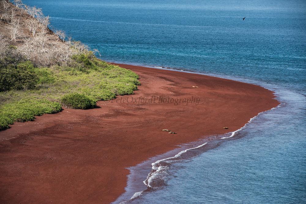 Scenic Rabida Island<br /> Galapagos<br /> Ecuador, South America
