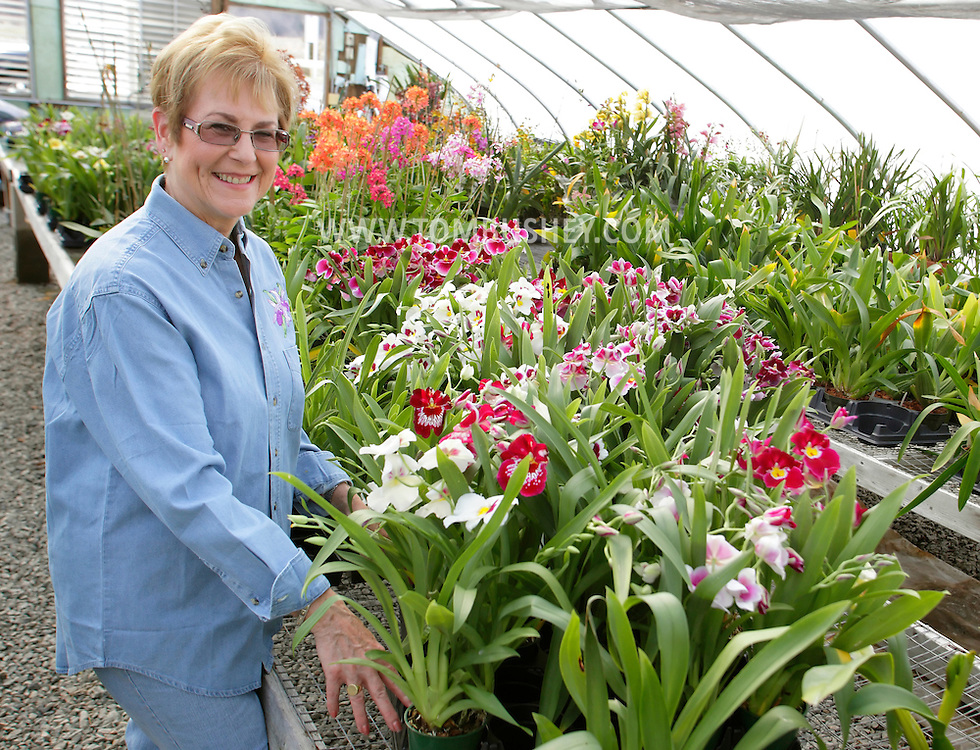 Chester, New York - Margaret Bridge of Black Meadow Flora in Chester with her orchids on March 18, 2011.