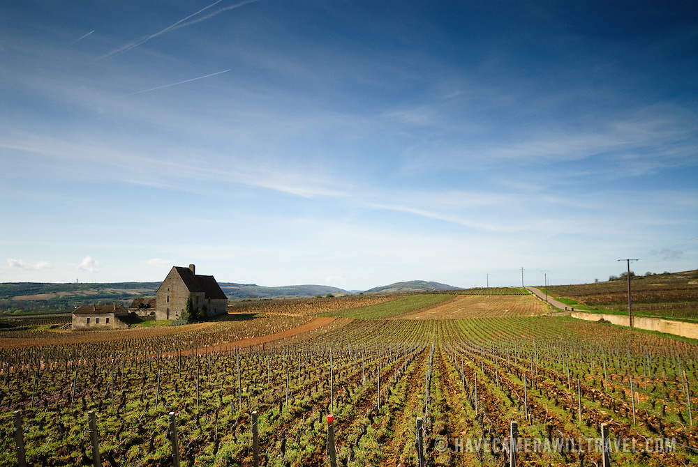 Solitary farm house in the French vineyard in Burgundy near Beaune