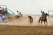 Will James Roundup, Ranch Rodeo, Wild Horse Roping, Hardin, Montana.