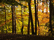 Town of Wallkill, New York - Autumn leaves are lit by the late afternoon sun at Highland Lakes State Park on Oct. 16. 2011.