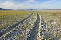 Tire tracks in dry lakebed, Alvord Desert Oregon