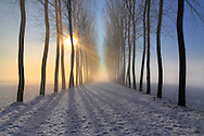 An alley of poplar trees in the countryside around Virle in Piedmont, Italy. Taken in a foggy morning of January at sunrise, after a snowy night.