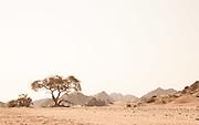 Desert tree, Hoanib River, Skeleton Coast, Northern Namibia, Southern Africa