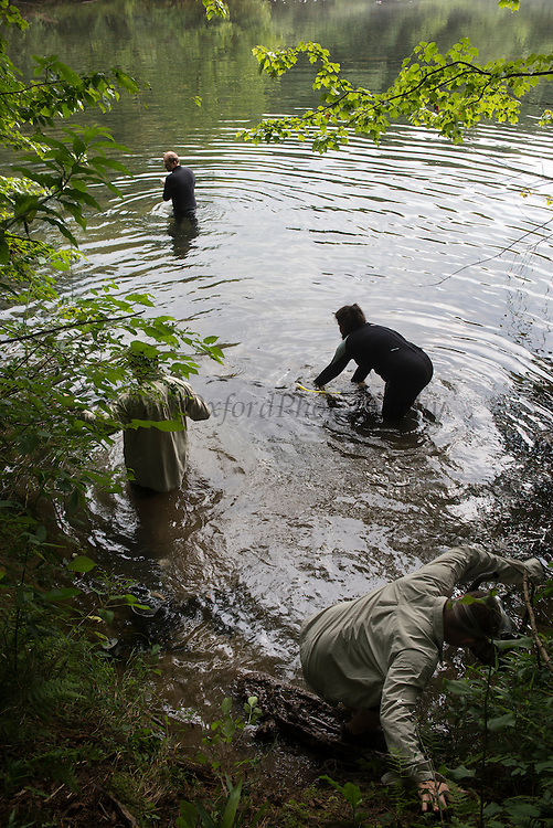 Researchers for Eastern Hellbender (Cryptobranchus alleganiensis <br /> Hiwassee River, Cherokee National Forest<br /> Tennessee<br /> USA