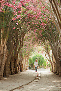 A woman walks up a path lined with trees in blossom, towards the souq at Byblos, a small coastal town in Lebanon