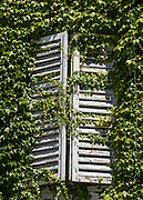 Ivy smothers a pattern of louvered wooden shutters in Bled village, in Slovenia, Europe. In 1991, Slovenia declared full sovereignty from Yugoslavia. 80% of its 2 million people speak Slovene. In 2004, Slovenia joined NATO and the EU (European Union), and later adopted the Euro € currency. Slovenia is the richest Slavic nation per capita.