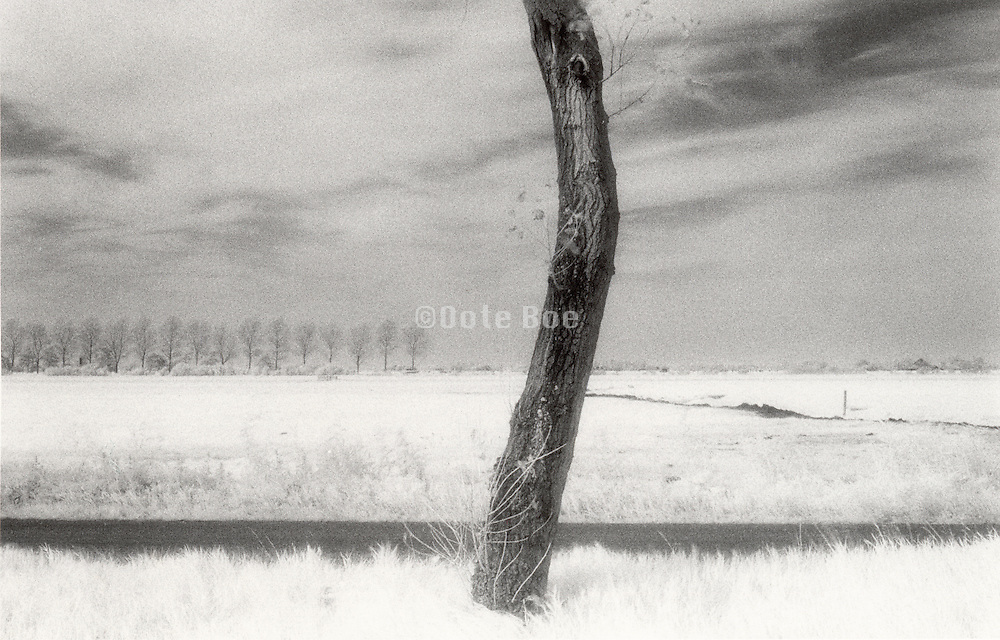 Bent tree trunk against rural background