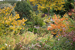 October in John Massey's garden including witch hazels in autumn colour
