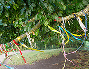 Colourful ribbons tied on branches of an ancient beech tree at stone circle henge, Avebury, Wiltshire, UK