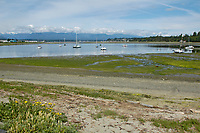 Very low tide at Goose Spit, Comox, Vancouver Island   Photo: Peter Llewellyn