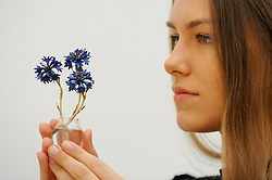 "© Licensed to London News Pictures. 02/06/2017. London, UK. A staff member presents ""A Fabergé gold, enamel and hardstone study of Cornflowers"", c. 1910, (Est. GBP 180-250k).  Preview of Sotheby's sale of Russian pictures and works of art which takes place on 6 June 2017 at Sotheby's in New Bond Street. Photo credit : Stephen Chung/LNP"