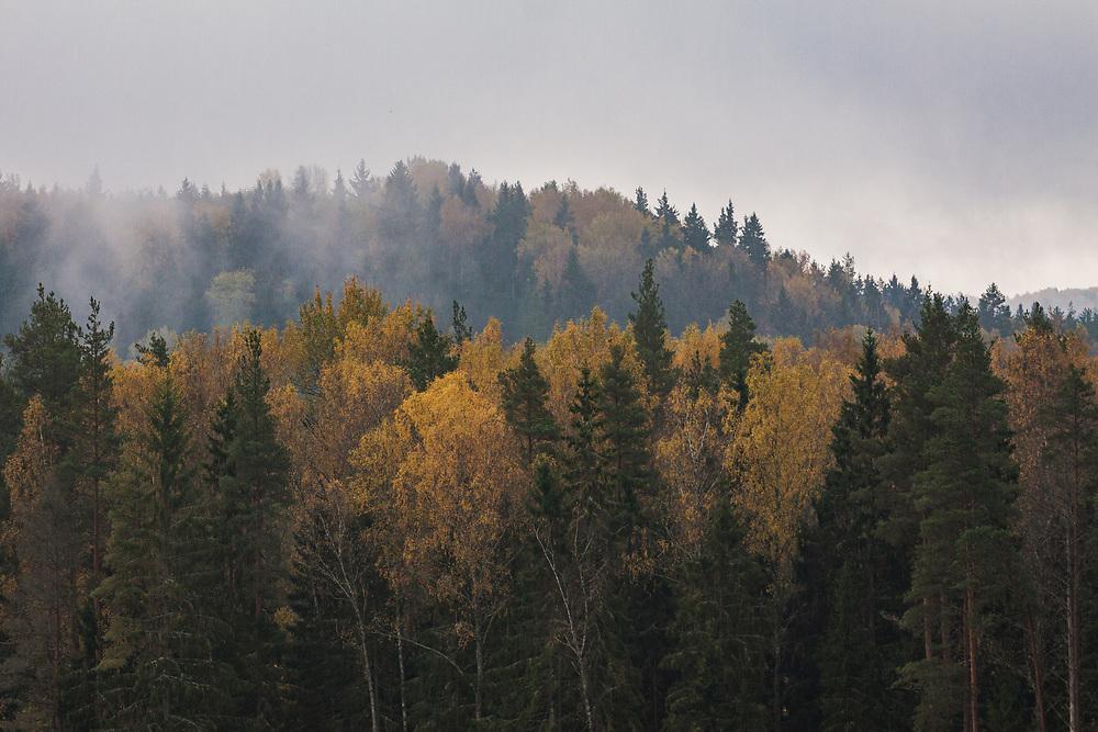 Autumn forest   Gauja National Park. Forests and trees in Latvia Ⓒ Davis Ulands   davisulands.com