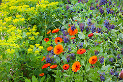 Cerinthe major 'Purpurascens' (honeywort), Euphorbia oblongata (Balkan spurge) and Calendula officinalis 'Indian Prince' (Marigold)
