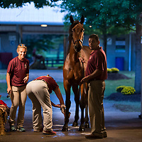 Lexington Select Yearling Sale 2018
