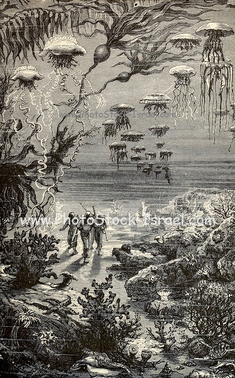A walk under the waters From the Book Twenty thousand leagues under the seas, or, The marvelous and exciting adventures of Pierre Aronnax, Conseil his servant, and Ned Land, a Canadian harpooner by Verne, Jules, 1828-1905 Published in Boston by J.R. Osgood in 1875