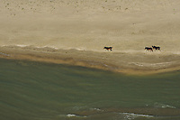 Wild horses, erials over the Danube delta rewilding area, Black Sea coast, Romania