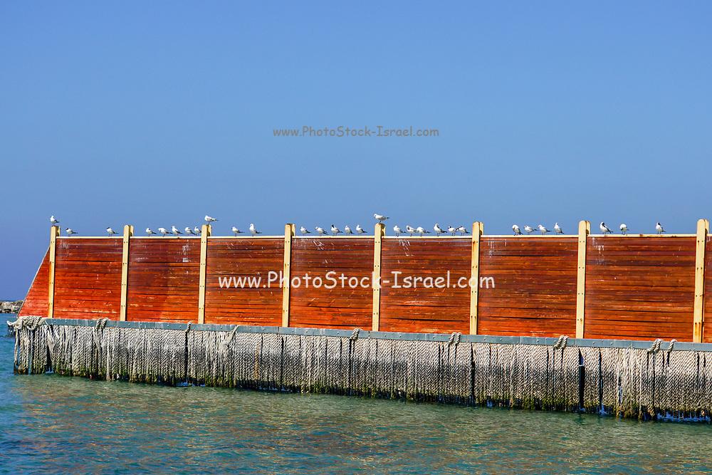 A flock of seagulls resting near the Mediterranean sea. Photographed in tel Aviv, Israel
