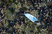 Covid mask discarded on a mussel bed on the coastline, Arniston, Western Cape, South Africa,