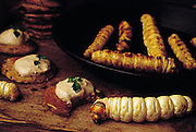Witchetty grub dip, and sautéed grubs; a live grub crawls through the foreground. Witchetty grubs are the larvae of cossid moths. Sydney, Australia. (Man Eating Bugs page 16)