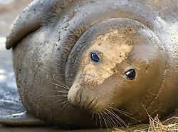 July 21, 2019 - Seal Lying Down (Credit Image: © John Short/Design Pics via ZUMA Wire)