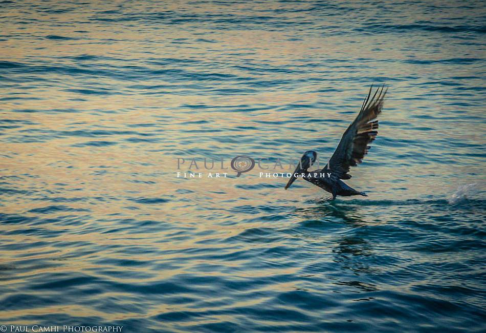 Fine Art Photography Paul Camhi