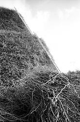 I tralci di vite che costituiscono la materia prima della FÚcara di Novoli. La FÚcara, la cui costruzione inizia la mattina del 7 gennaio, Ë dedicata a Sant'Antonio Abate ed Ë costituita da un falÚ realizzato con fascine di tralci di vite (sarmente) recuperate dalla rimonta dei vigneti. Sulla cima della fÚcara, la mattina della Vigilia, viene issata un'artistica bandiera sulla quale Ë l'immagine del Santo. L'accensione della FÚcara avviene attraverso una batteria-fiaccolata. Una volta accesa, la FÚcara arde tutta la notte dando vita al fenomeno detto delle fasciddre, le faville che, nell'aria, somigliano ad una pioggia di fuoco. (fonte http://www.comune.novoli.le.it/focara/storia_focara.php).