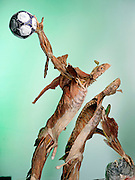"""The Goalkeeper,"" a piece from Gunther von Hagens' Body Worlds exhibits. Body Worlds is a traveling exhibit of real, plastinated human bodies and body parts. Von Hagens invented plastination as a way to preserve body tissue and is the creator of the Body Worlds exhibits.."